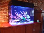 аквариум символ процветания