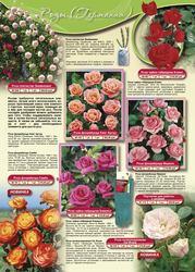 Семена,  саженцы цветов и растений почтой  www.interfloraxxi.ru