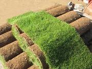 продажа бизнеса- промышленное выращивание рулонного газона