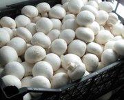 Свежие грибы и овощи. Доставка по Саратову бесплатно.