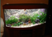 Обслуживание аквариумов Саратов