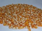 Экструдированная кукуруза, ячмень, пшеница от производителя опт. Балашов